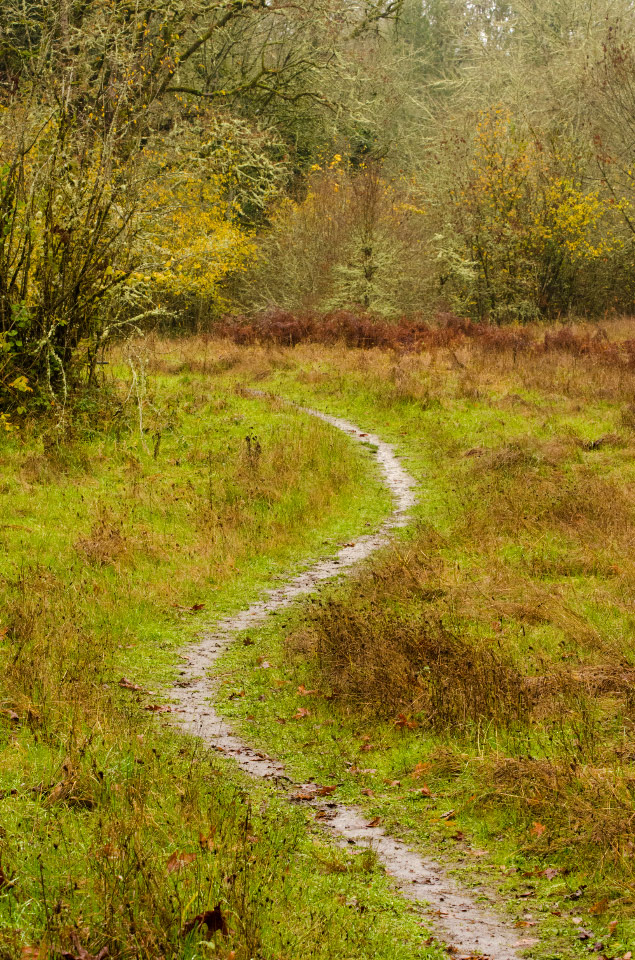 Path through a rain-drenched meadow