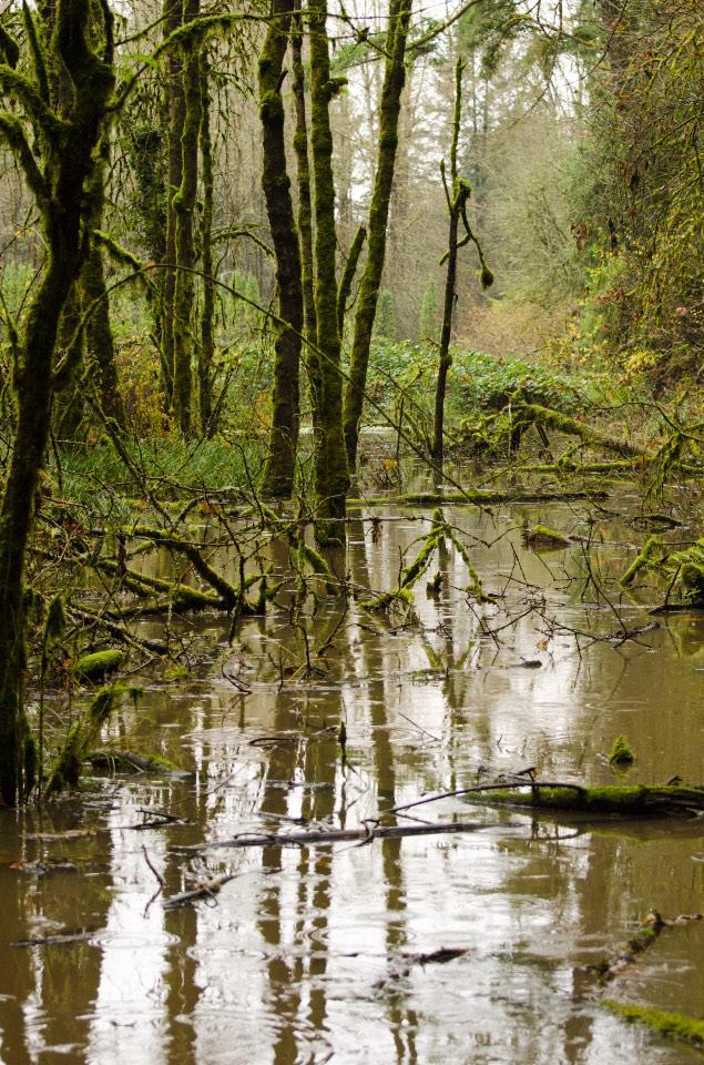 Marshy area along trail