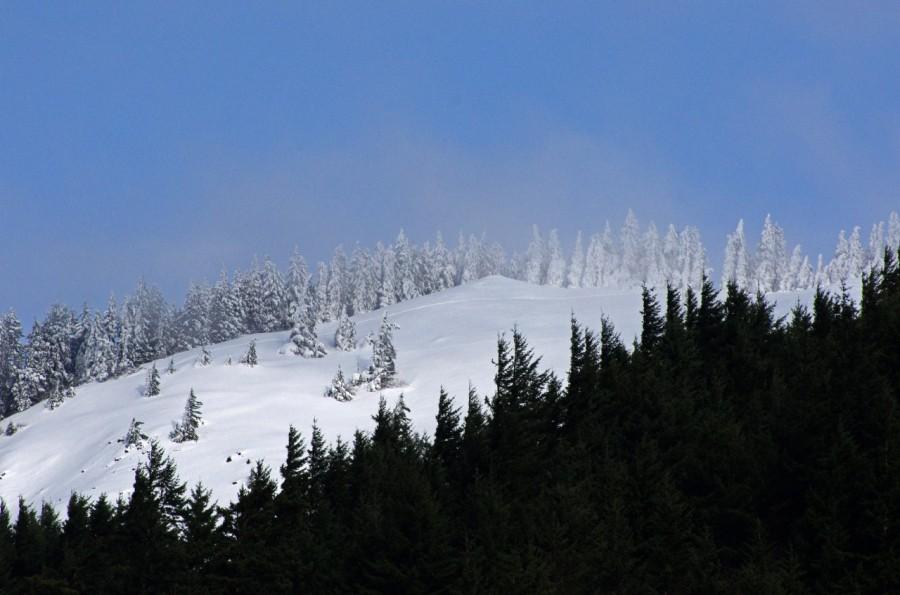 Summit of Dog Mountain