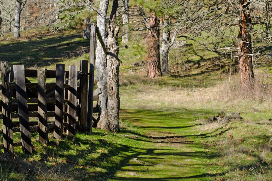 Sun-dappled trail leading by an old corral