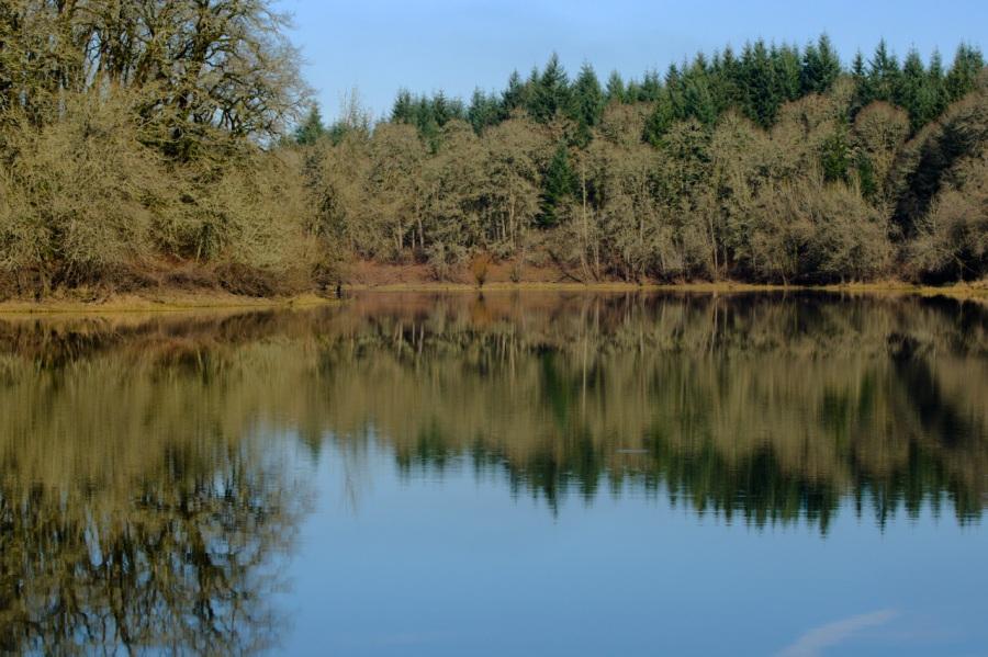 Oak tree reflections in a lake along the trail