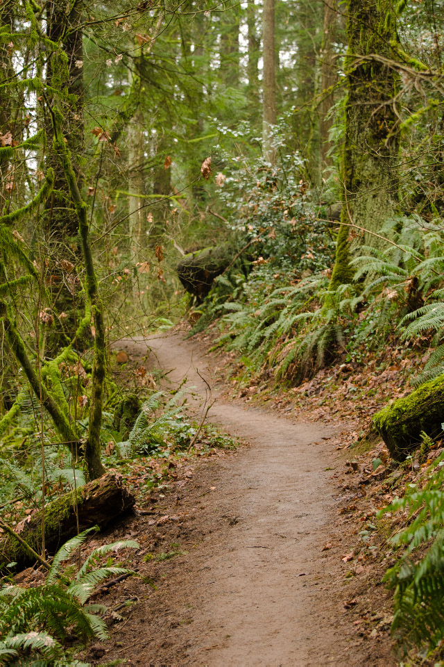 Marquam Trail