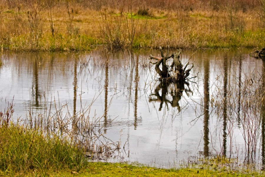 Reflections in a small pond