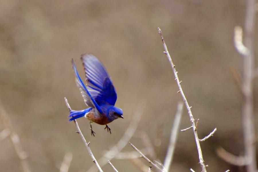 The Burdoin Lollipop Adventure with BeautifulBluebirds