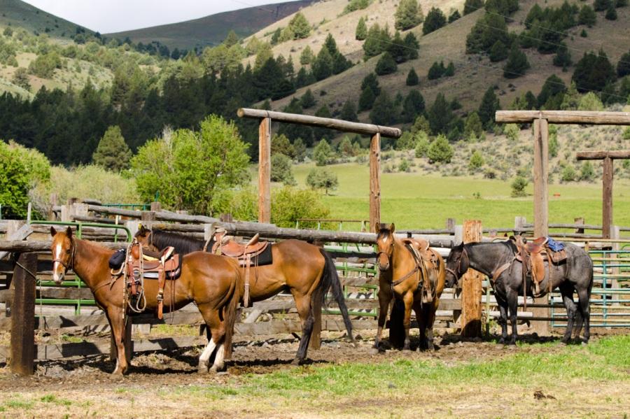 An Enjoyable Stay at Wilson RanchesB&B