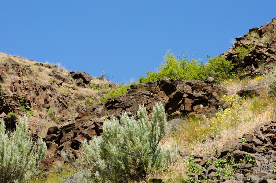 Sagebrush and brown Basalt