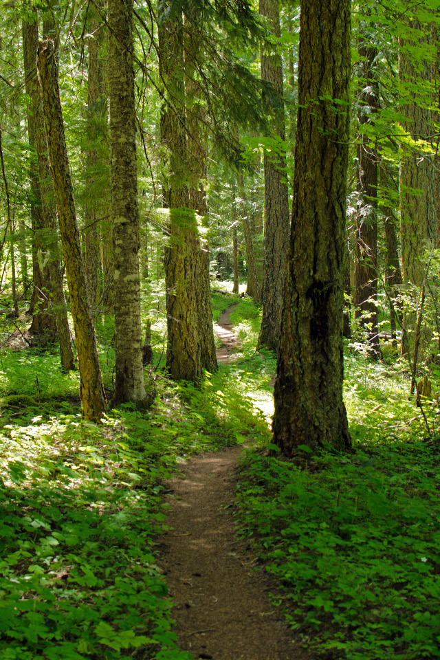 Trail leading through a mature Hemlock forest