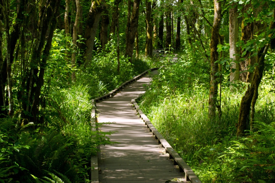 Boardwalk along marshy area of trail