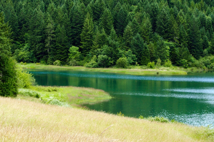 Pleasant cove in Henry Hagg Lake
