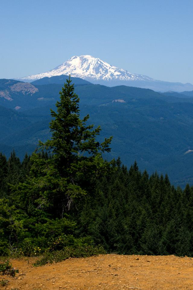 Mt. Adams in distance