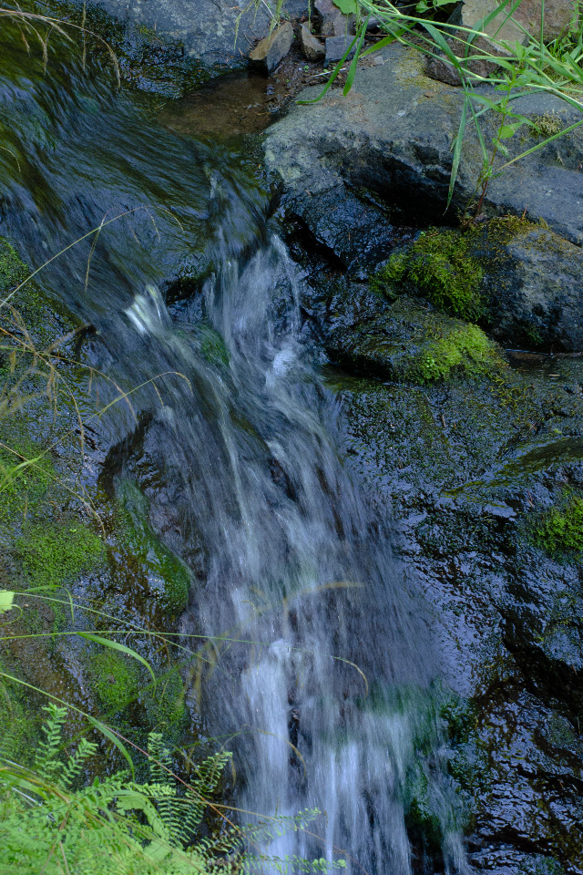 Tributary Creek