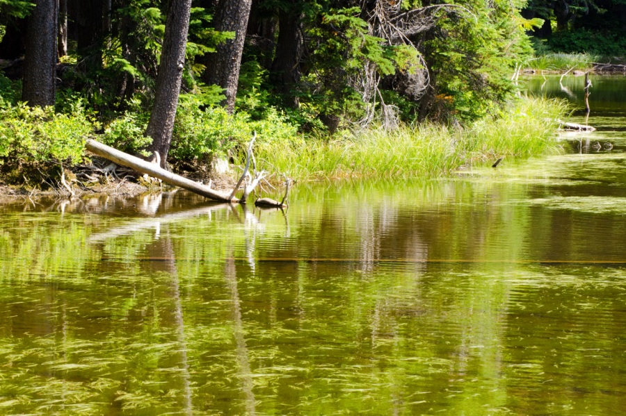 Oval Lake