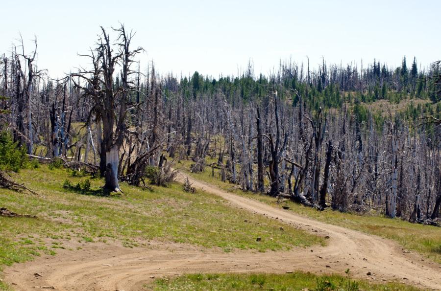 Road near summit of Darland Mountain