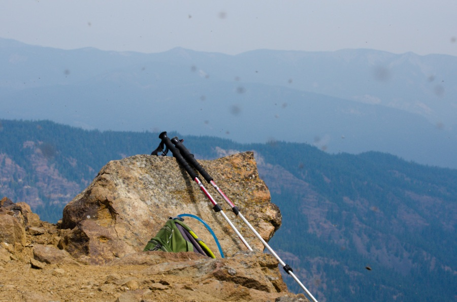 Thousands of flies on the summit of Goat Peak (a common occurrence when the wind is slack)