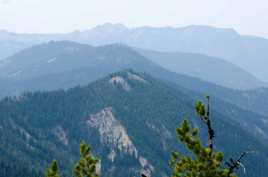 Looking over an old Whitebark Pine to the American Ridge extending into the distance