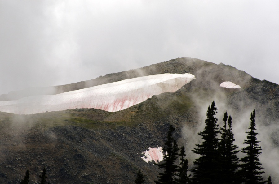Melting snowfield on Mt. Rainier near Sunrise Lodge