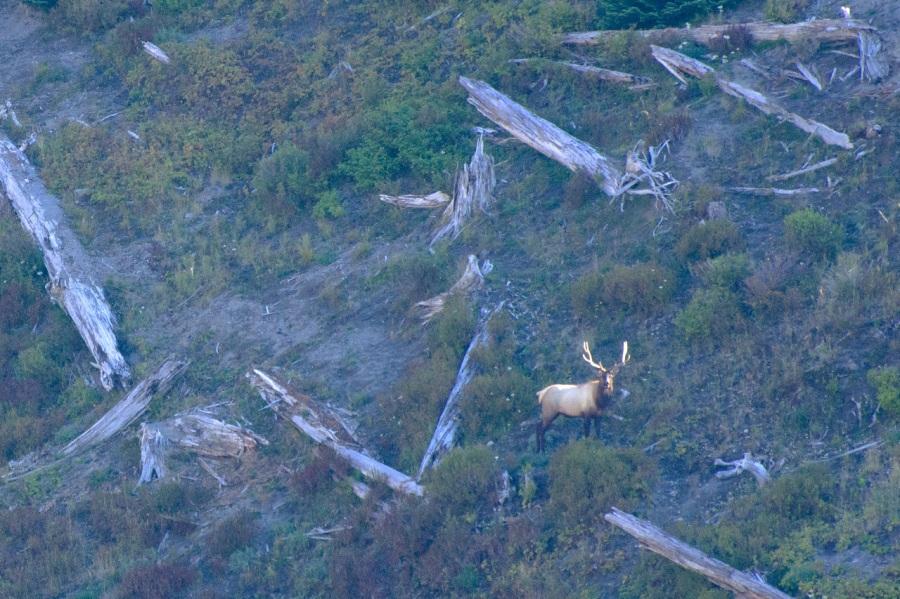 Every elk hunter's dream