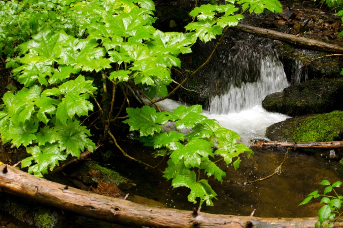Small waterfall along the trail