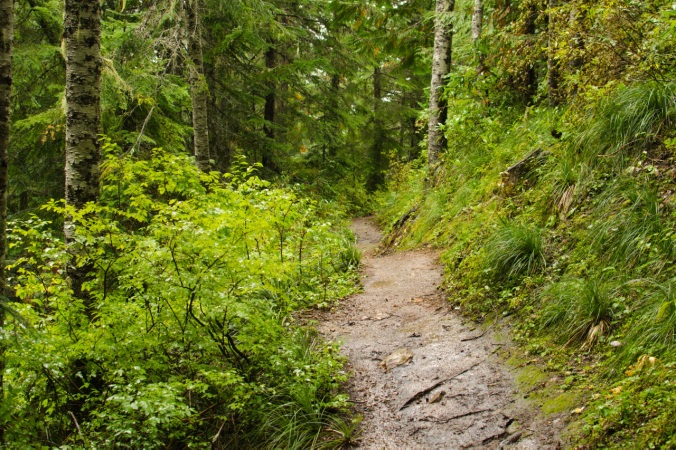 The muddy trail bordered by Beargrass and Huckleberry bushes