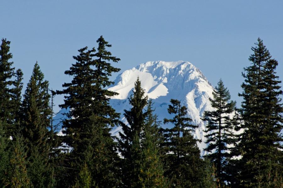 Mt. Hood peaking above the trees