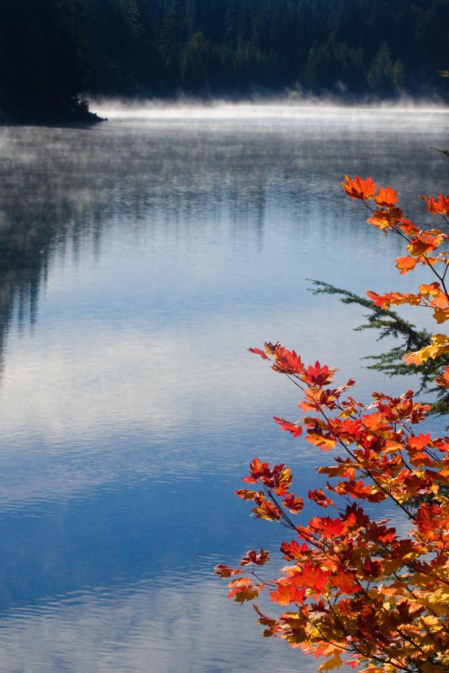 Vine Maple framing Timothy Lake