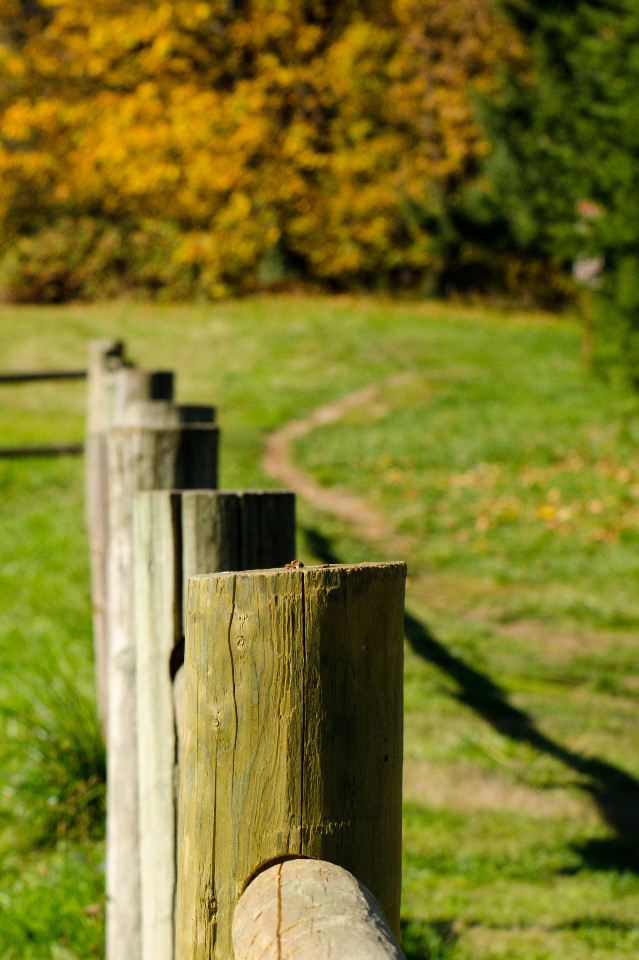 Fence posts along the trail