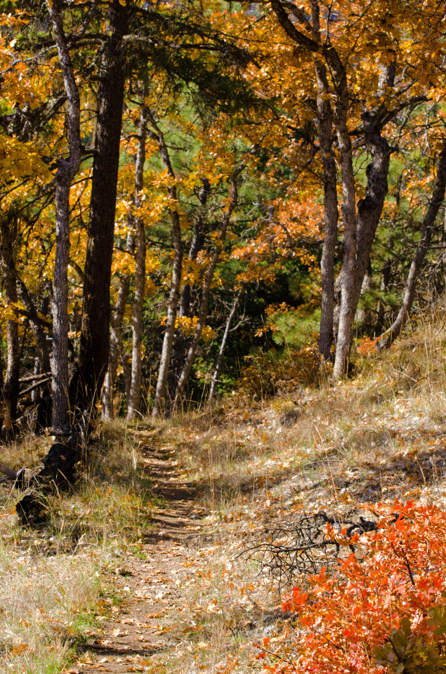 Colorful Oak Trees lining the trail