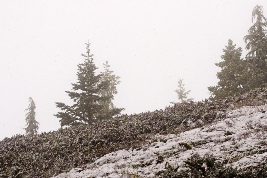 Snow falling on Horseshoe Ridge