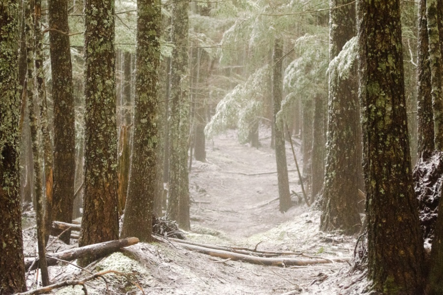 A short portion of the trail follows an old logging road