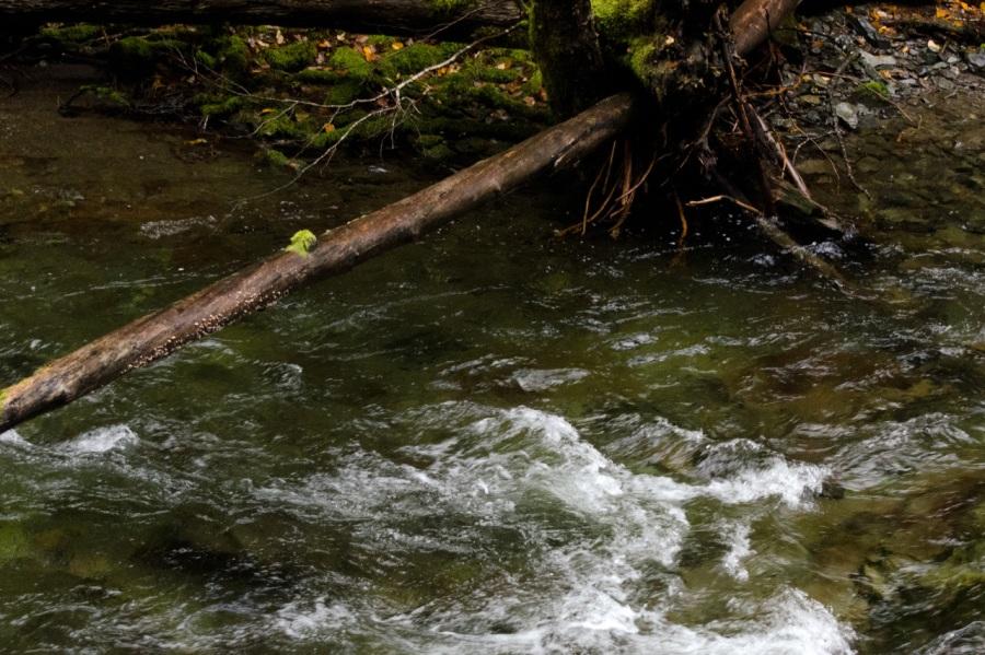 Siouxon Creek