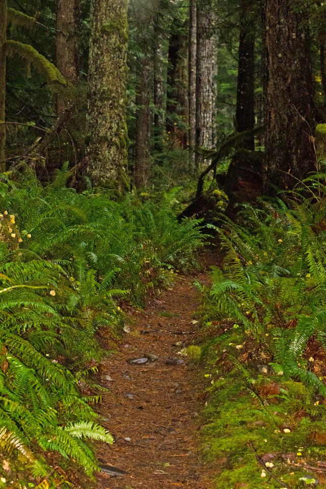 Pleasant trail along Siouxon Creek
