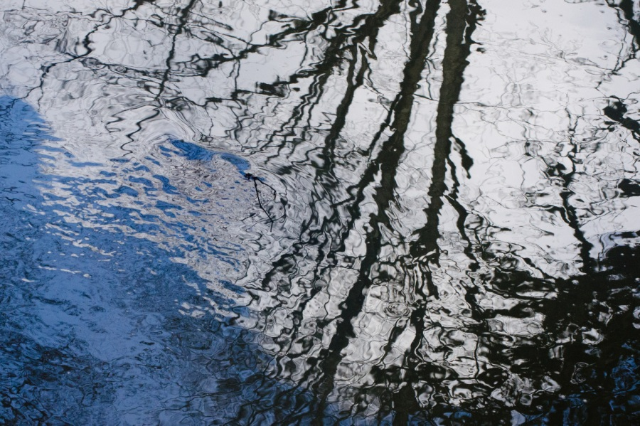 Reflections in Tryon Creek