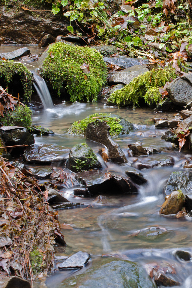 Tributary to Tryon Creek