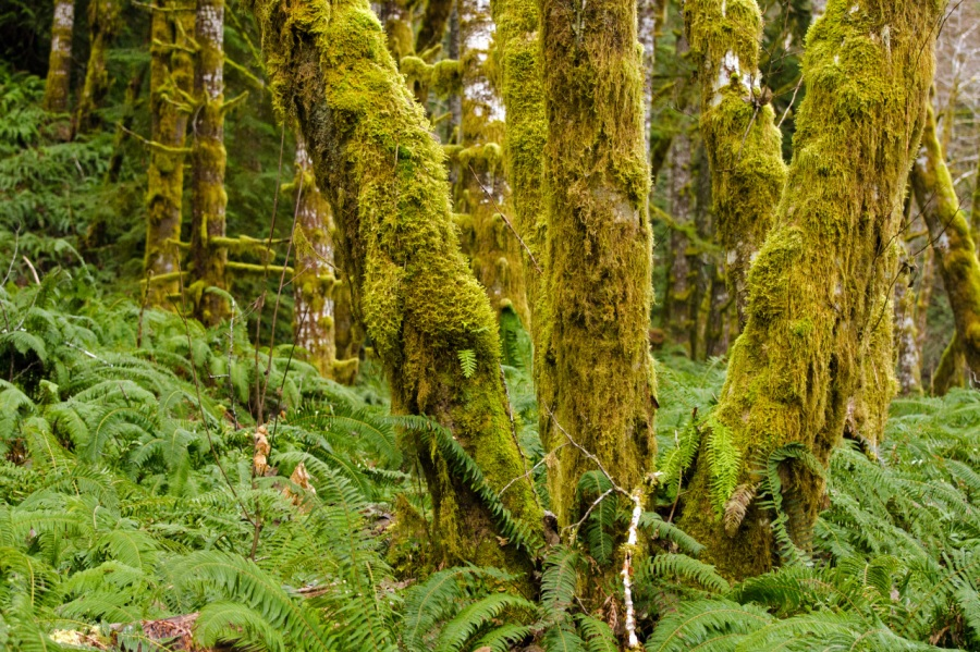 Ferns and moss - - - a sure giveaway that you're in a rainforest
