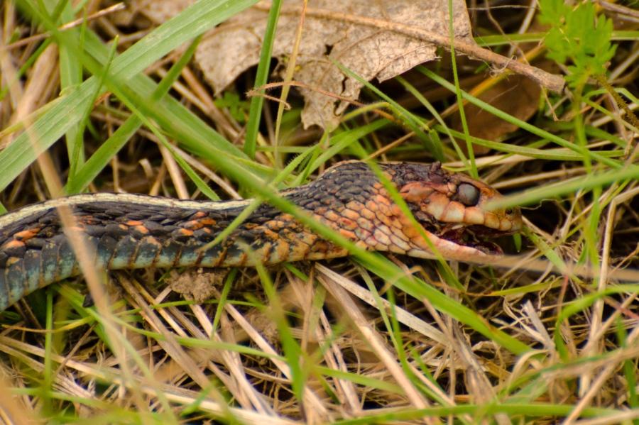 Snakes live a tough life