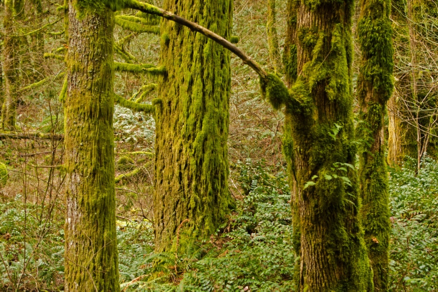 Ferns, lichens and moss of the second-growth rain forest
