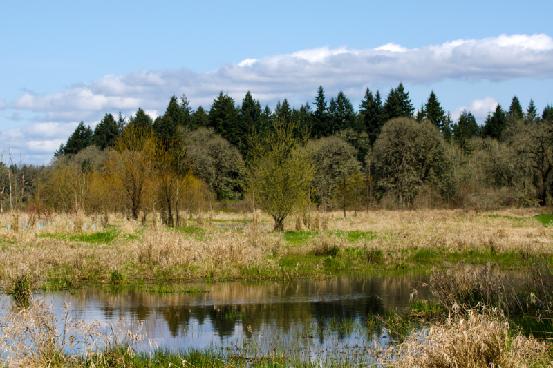 One of several lakes in the Carty Unit