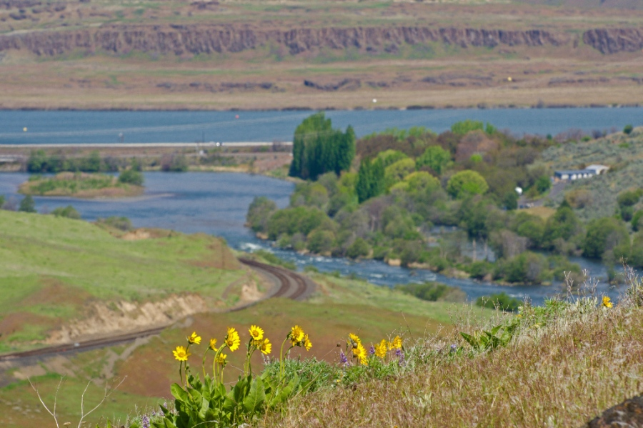 Deschutes flowing into the Columbia River
