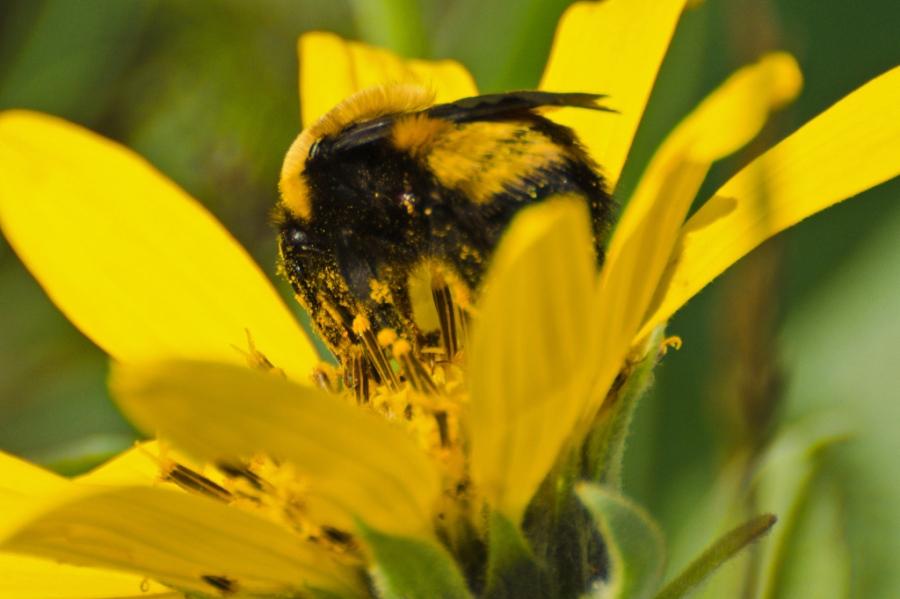 Bee & Balsamroot
