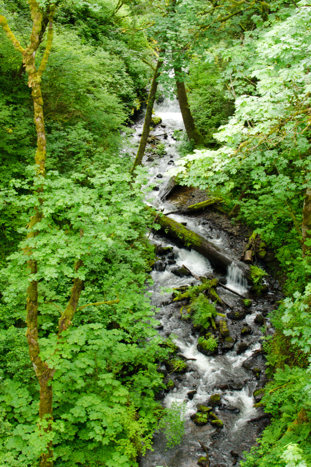 Latourell Creek between the two waterfalls
