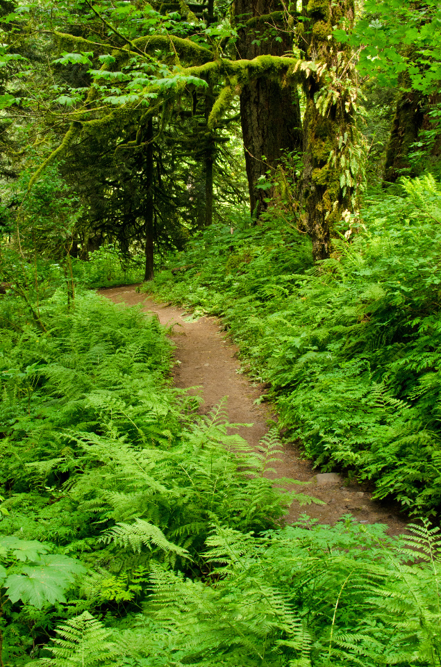 Lots of greenery along the trail