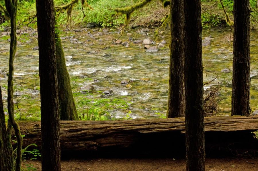 Nice campground near Siouxon Creek