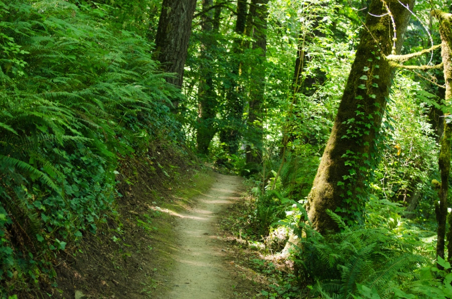 Pleasant stretch of the Marquam Trail