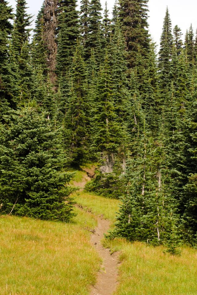 Open meadows on Russel Ridge