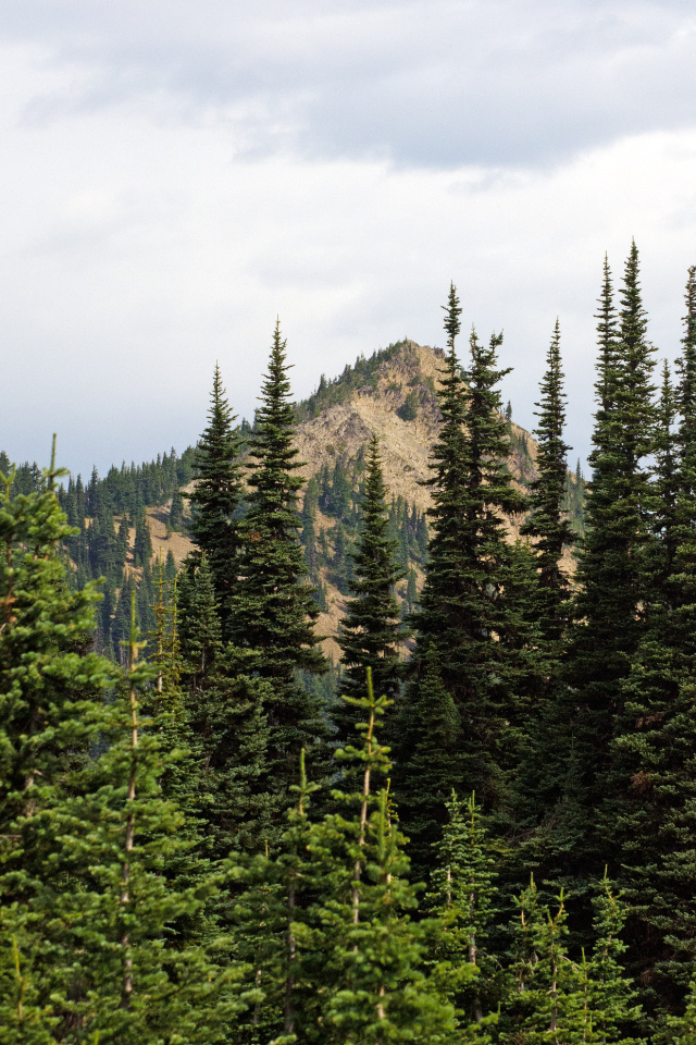The summit of McNeil Point peaking above the trees