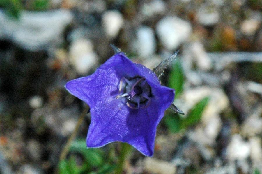 Odd wildflower