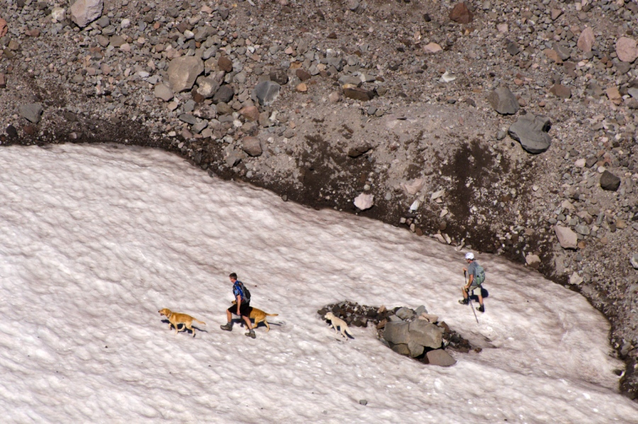 Hikers and their dogs on the toe of Eliot Glacier