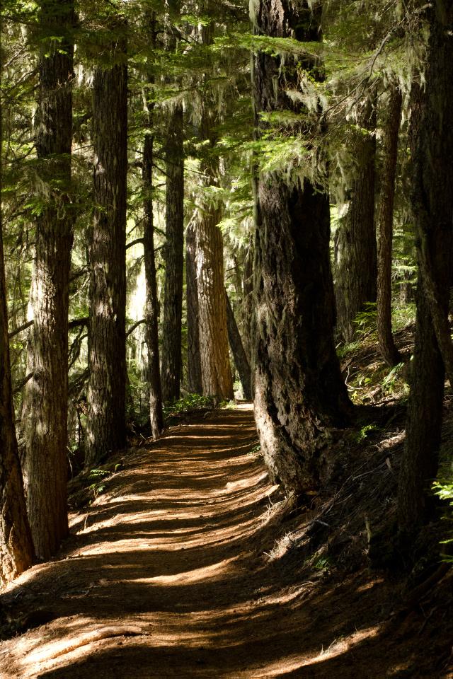 Sun-dappled trail