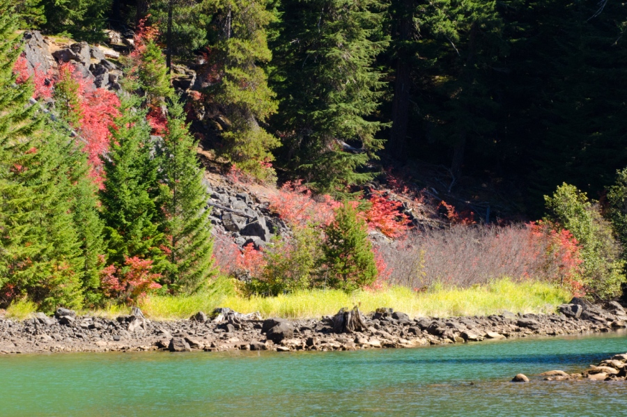 Vine Maple leaves providing color to the shore of Timothy Lake