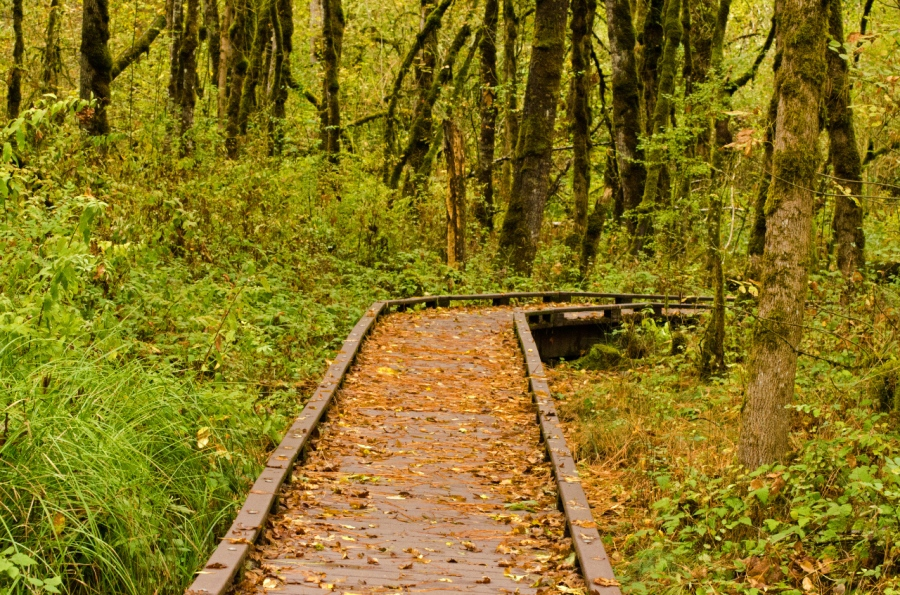 Leaves falling on the wooden path